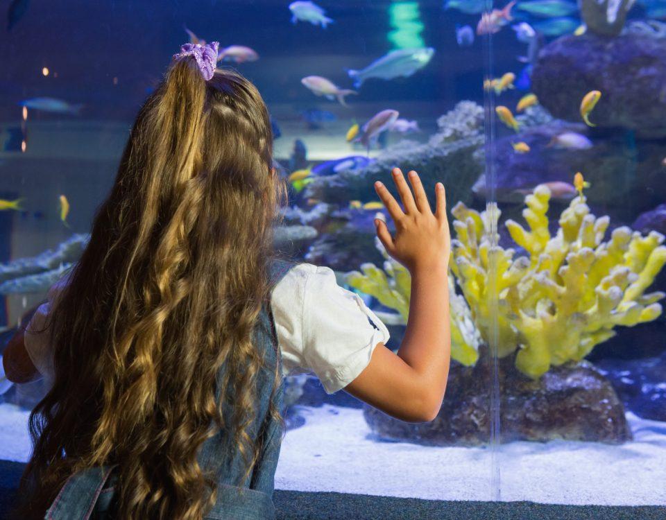location aquarium a Nice